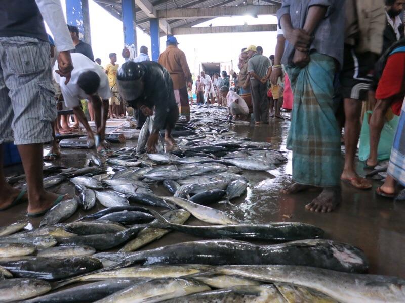 デウンダラ魚市場