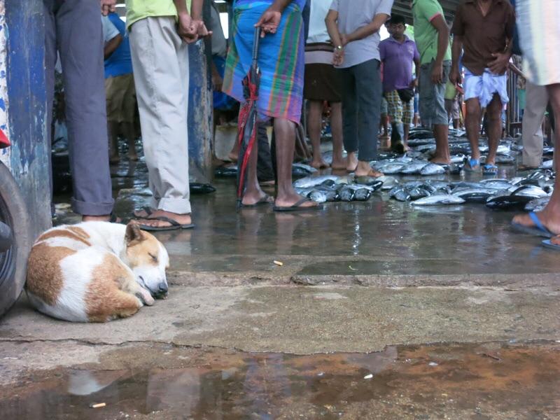 魚市場で寝る犬