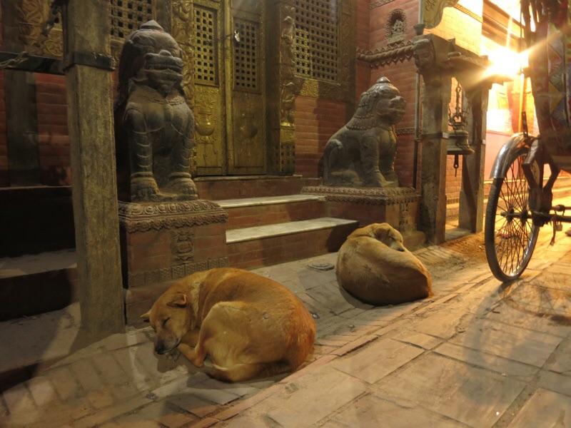 ネパールの犬達