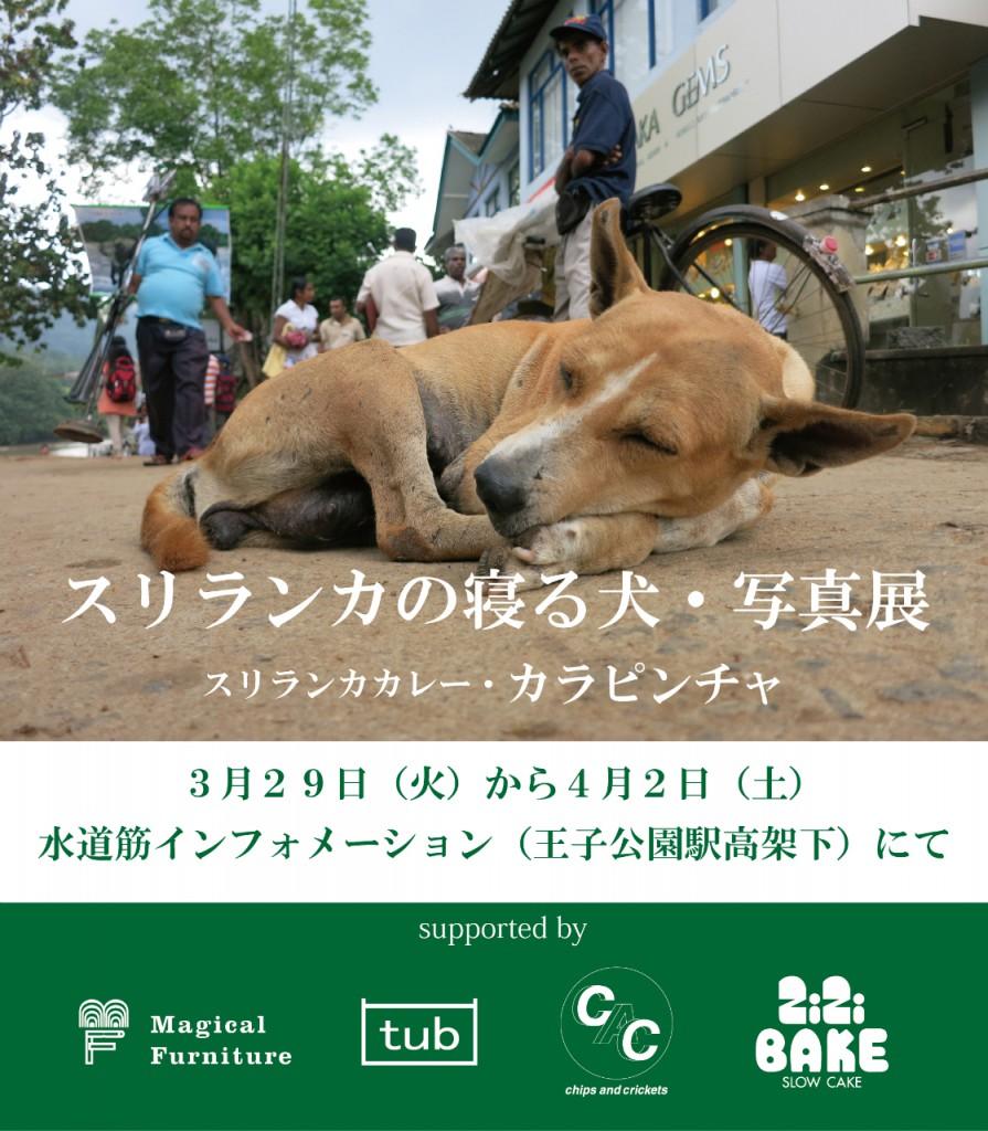 スリランカの寝る犬写真展