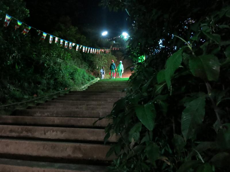 スリーパーダ夜