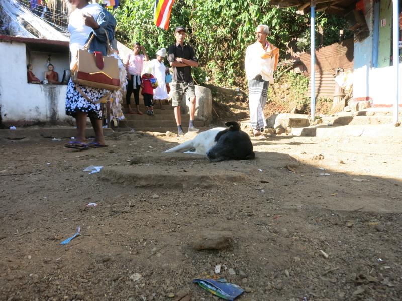 スリーパーダの寝る犬
