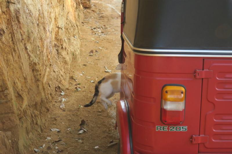 スリーウィーラーに乗り込む猫。