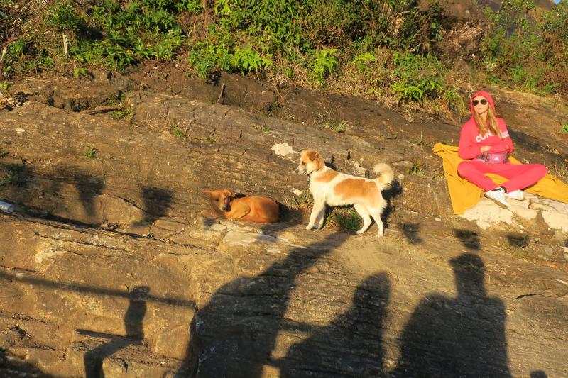 051犬も人