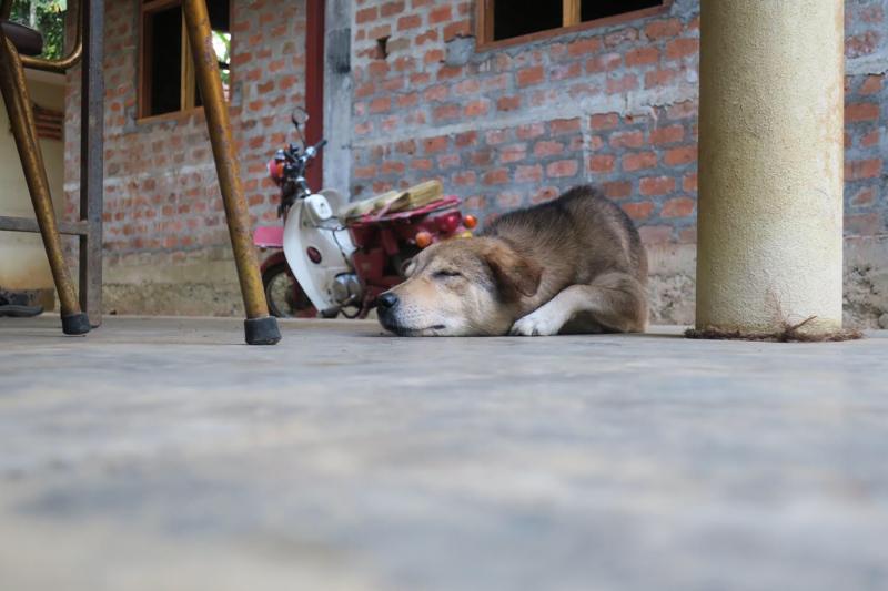 sleepingdoginsrilanka