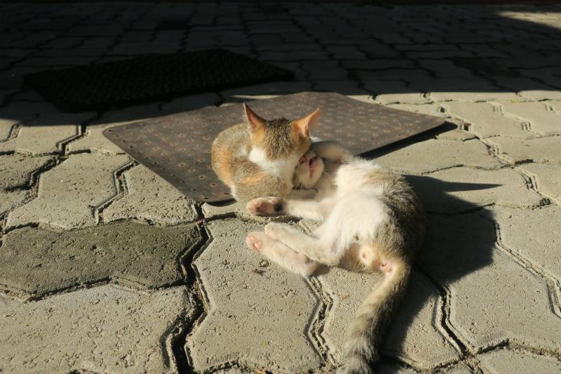 仲良し猫兄弟