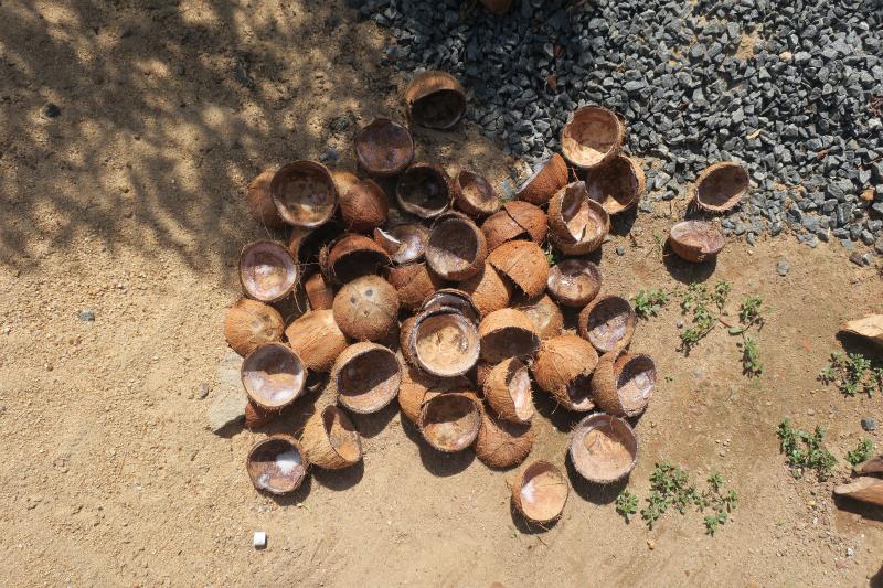ココナッツの殻
